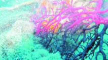 Dans les profondeurs, les coraux brillent pour survivre