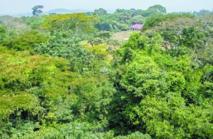 Financer la forestation en Afrique, nouvelle stratégie contre le réchauffement