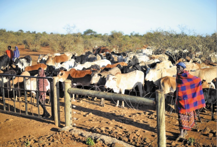Deux éleveurs semi-nomades défendent leur mode de vie