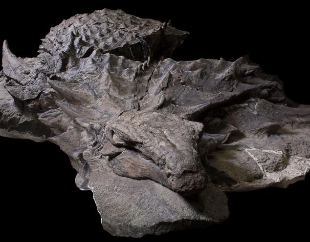 Découverte d'un nouveau dinosaure bien préservé