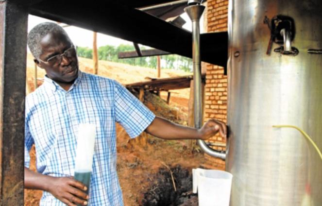 Les huiles essentielles pour décupler les revenus agricoles au Rwanda