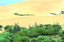 Dunes d'Essaouira : Autant en emporte le vent