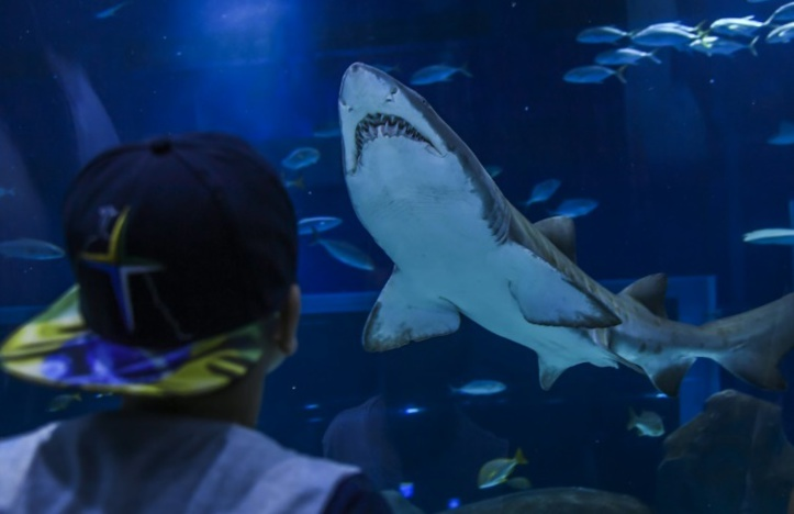 Mission fécondation à Rio pour des requins