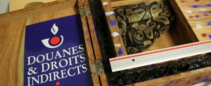 Insolite : Découverte d'un python dans les bagages d'un passager arrivé dans un aéroport parisien
