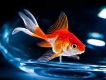 Insolite : Louer un poisson pour la nuit, l'idée insolite d'un hôtelier belge