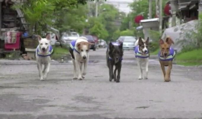 Insolite : Des chiens errants équipés de caméras de surveillance