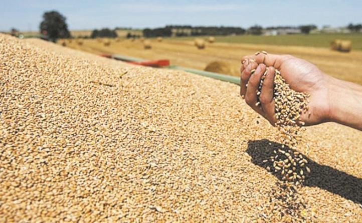 Baisse des prix des produits alimentaires au mois d'août