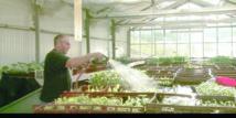 Des détenus en fin de peine se réadaptent à la ferme en France