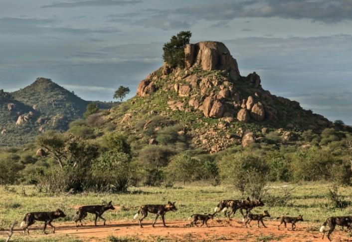 La faune sauvage kenyane décimée par des invasions de réserves privées