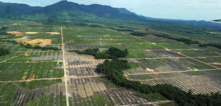 Les Tropiques émettent plus de CO2 qu'ils n'en capturent