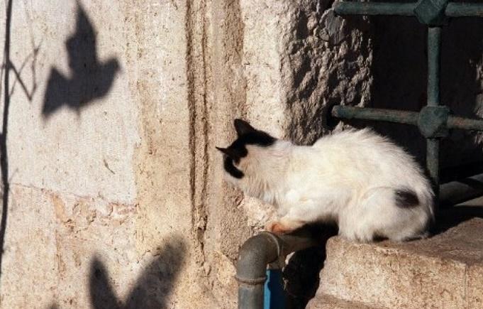 En Australie, un million d'oiseaux sont tués par les chats chaque jour