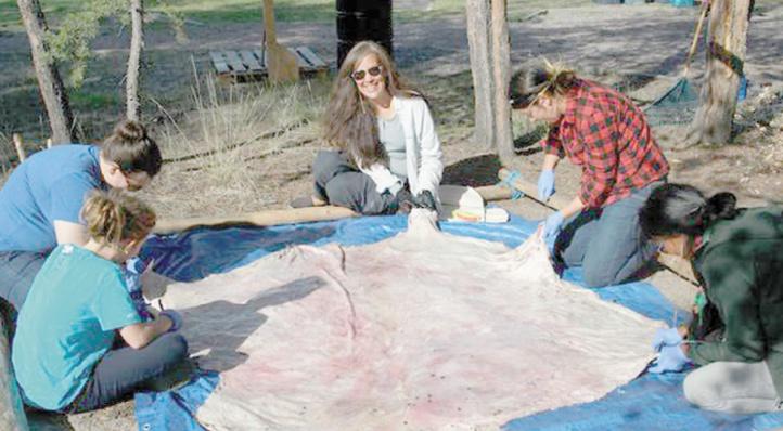 Tannage des peaux au Canada pour préserver l'héritage ancestral des Amérindiens