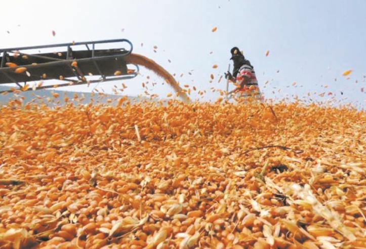 L'activité agricole continue de booster la croissance économique
