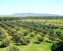 Région de Taza-Al Hoceima-Taounate : Consultations autour de la Charte de l'environnement