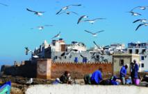 Célébration de la 3ème édition de  la Semaine des migrants à Essaouira