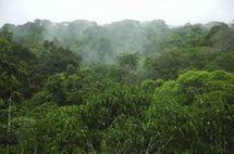 Les questions forestières en Afrique du Nord et la gouvernance territoriale