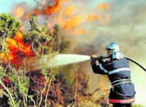 Quand les incendies de forêt font des ravages