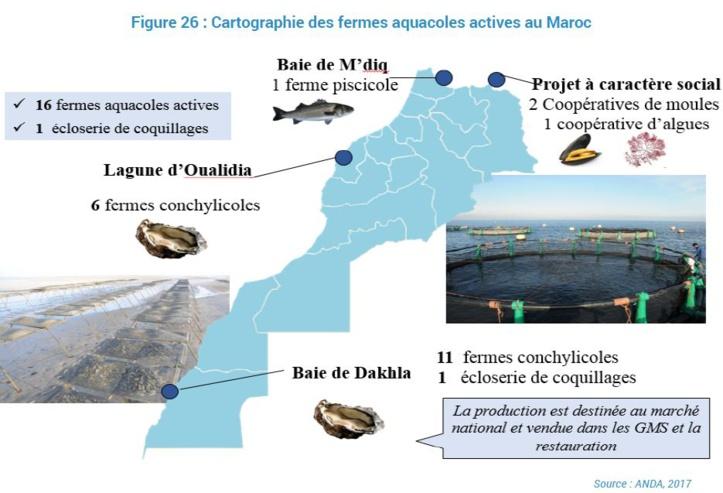 L'aquaculture marocaine en phase de décollage