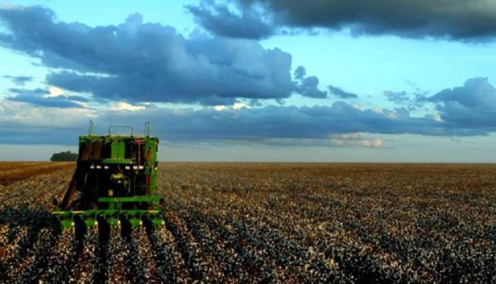 Pas d'impact négatif sur la campagne agricole en dépit du retard des pluies dans la région Casablanca-Settat
