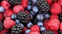 Naissance à Larache de la Fédération interprofessionnelle marocaine des fruits rouges