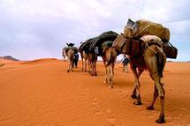 Le Sahara revisité : tourisme saharien et politique