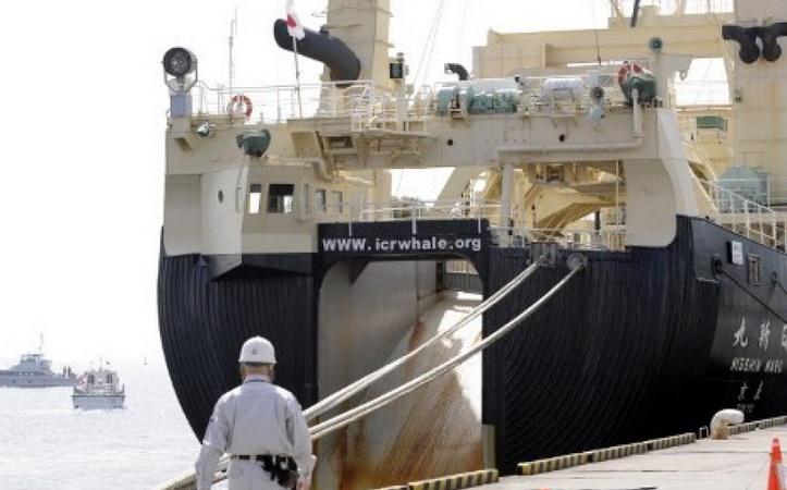 Le Japon décidé à poursuivre la chasse à la baleine
