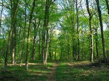 La question pastorale en forêt