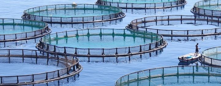 Pour une valorisation de l'aquaculture dans le Souss-Massa