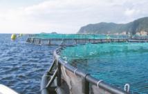 L'ANDA affiche de grandes ambitions pour une aquaculture durable