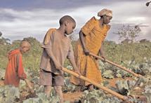 Accaparement des terres agricoles en Afrique : efficacité ou respect des droits ?
