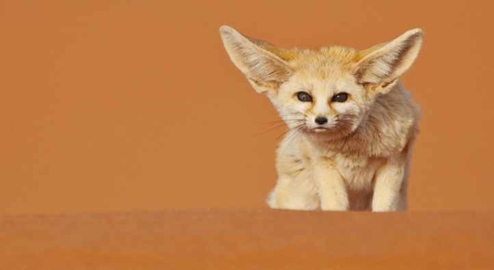 Le Maroc en branle-bas de combat contre le commerce illicite des espèces sauvages