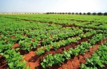L'agriculture affiche une évolution favorable suite à une bonne pluviométrie