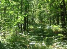 La forêt améliore le bien être de l'homme et agit sur son état de santé : La récréation au naturel