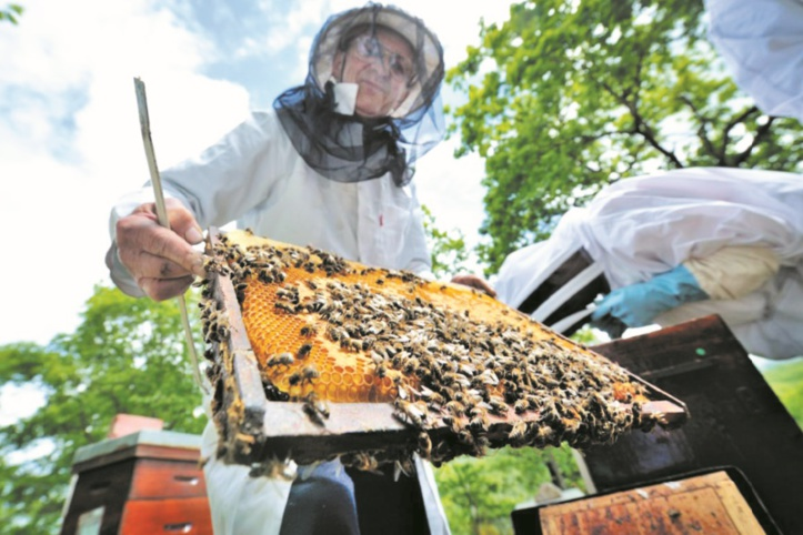 Des araignées salvatrices pour l'apiculture