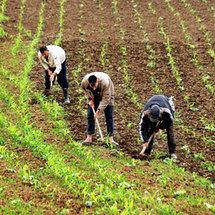 Mise en œuvre du contrat-programme entre l'Etat et les filières agricoles : Six conventions signées avec des filières agricoles