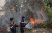 Essaouira : 60 hectares du domaine forestier partis en fumée