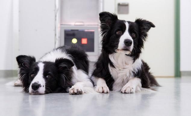 Les jeux vidéo pourraient aider les chiens à rester jeunes
