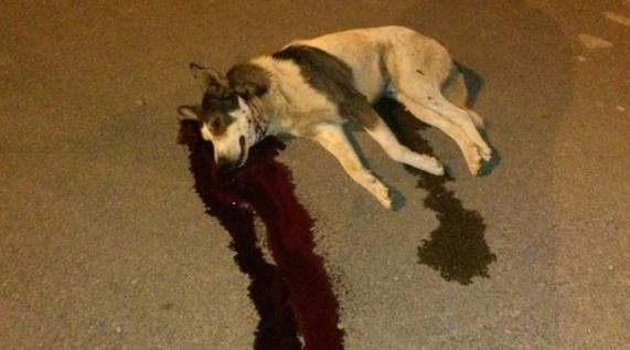 L'abattage des chiens une vile pratique impunie