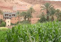 Tinghir : La grogne contre la soif