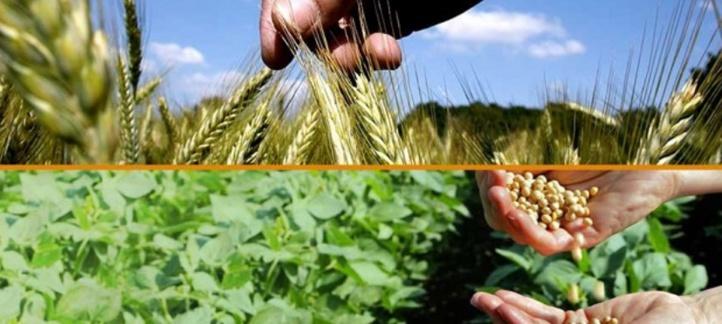 Le Maroc en passe de réussir son pari dans le domaine agricole