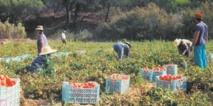 Hausse de plus de 7% du PIB agricole à 125 MMDH