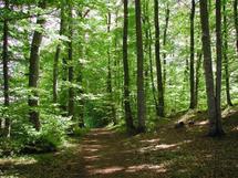 La candidature marocaine officiellement déclarée lors du Med Forum : Ifrane rejoint le Réseau international des forêts modèles