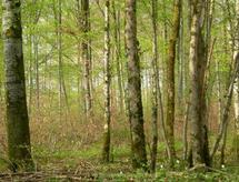 Forêts modèles : une approche innovante de la gouvernance territoriale