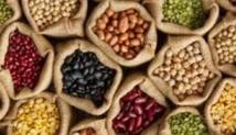 Débat à Marrakech sur les progrès dans le domaine de la recherche sur les légumineuses
