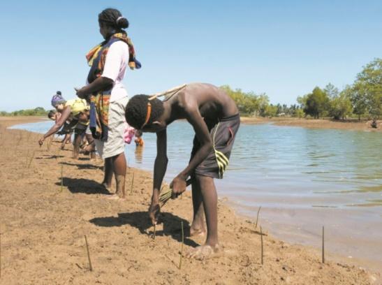 Replanter la mangrove pour améliorer le quotidien des pêcheurs malgaches