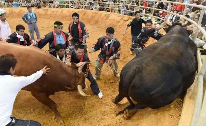 Les femmes japonaises ne sont plus interdites dans l'arène des combats de taureaux