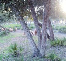 Le dernier rapport annuel de la Cour des comptes avait tiré la sonnette d'alarme : La mauvaise gestion de la forêt marocaine unanimement dénoncée