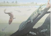 Des fossiles de tétrapodes remettent en cause la théorie des tropiques