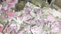 Insolite : Des roupies grignotées par des rats