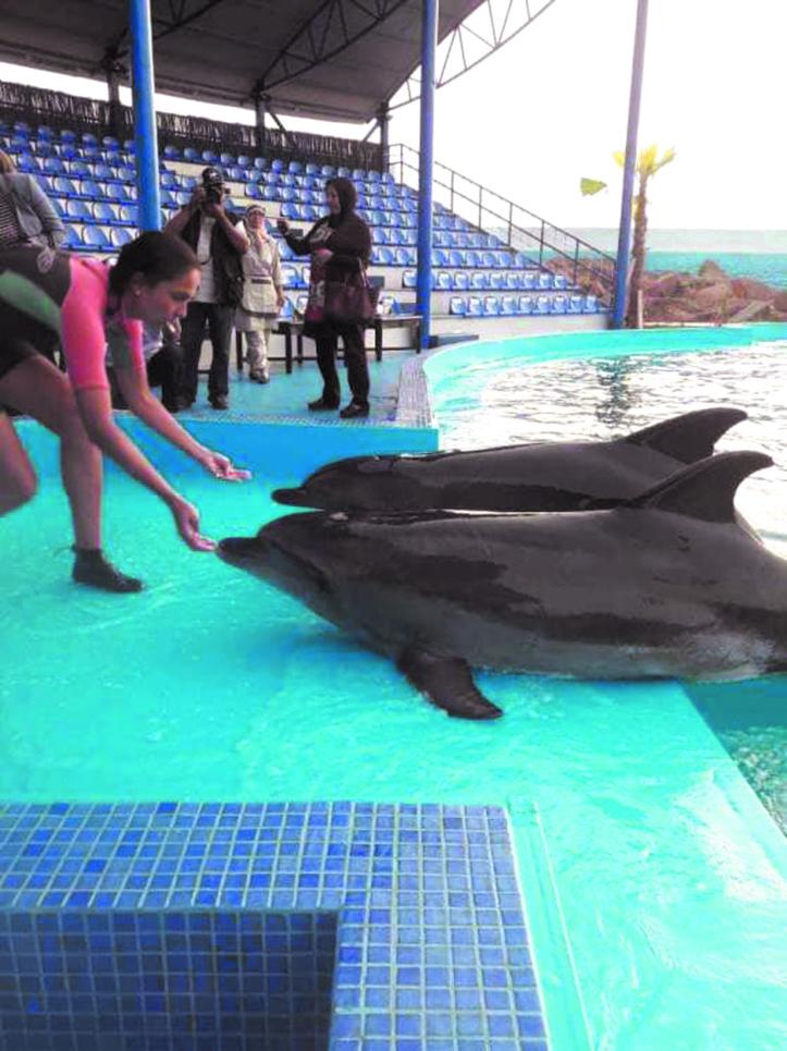Agadir a son delphinarium